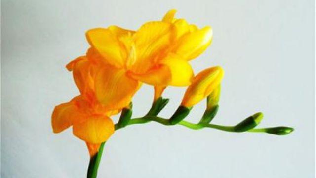 三月份适合种什么花 适宜三月份种植的花