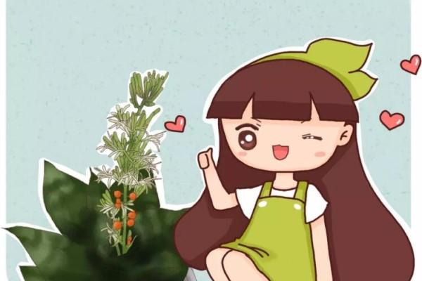 你家的芦荟发财树…从来不开花?只学1招,连开5年不是事!