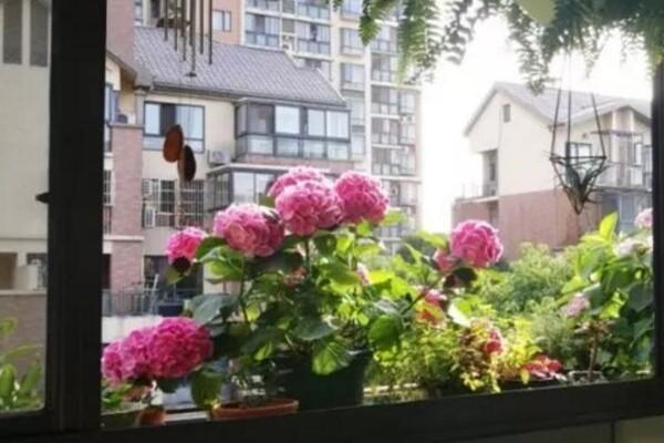 这6种花随便种,不出1个月,北阳台变百万花园!