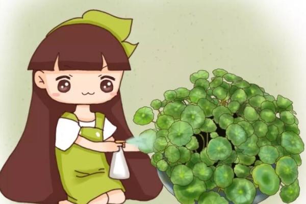 绿萝铜钱草…叶子比8个硬币还大,咋养的?