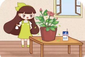 给花喂点牛奶,虫子全死光,别再喷药了!