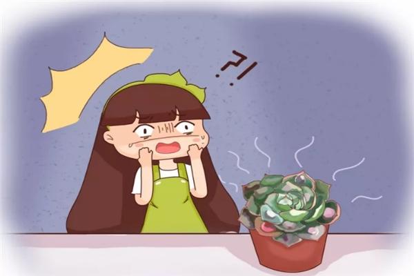 """你家的花丑成""""梅超风""""?学1招,花朵呼呼猛开不见叶!"""