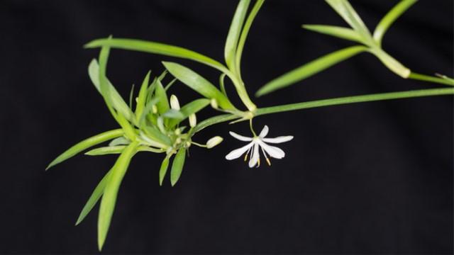 2020最适合室内养的植物排行榜 适合懒人养不死的室内植物
