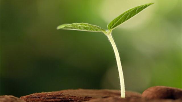 水果种子怎么做盆栽