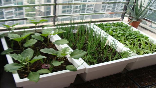 阳台种菜如何施肥