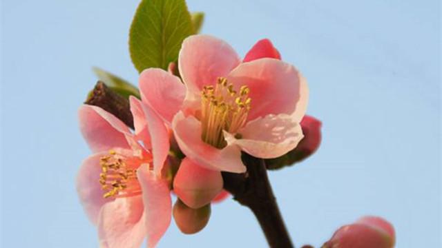 梅花的品种分类