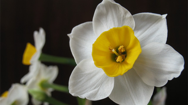 水仙花什么时候开花