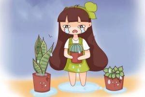 养花遇到下雨天,叶子发霉还长斑,再不管全得死翘翘!