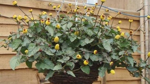 """阳台养腻了瓜果蔬菜?不如种点""""果核"""",长出来的盆栽超可爱"""