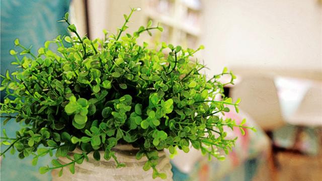 """养花的土变硬怎么办?别傻乎乎的浇水了,给花""""换个盆""""吧!"""