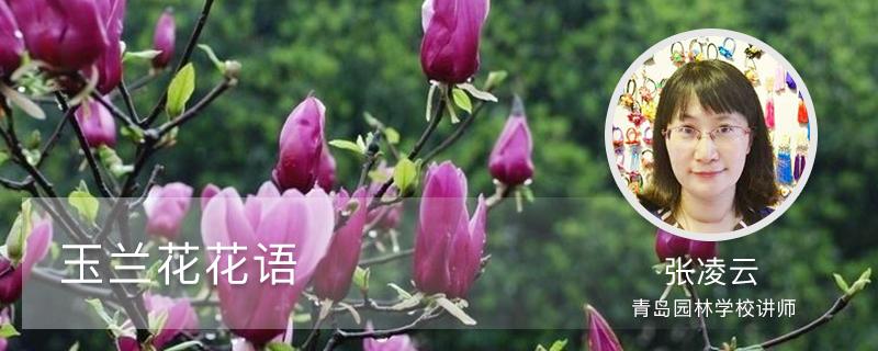 玉兰花花语