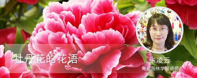 牡丹花的花语
