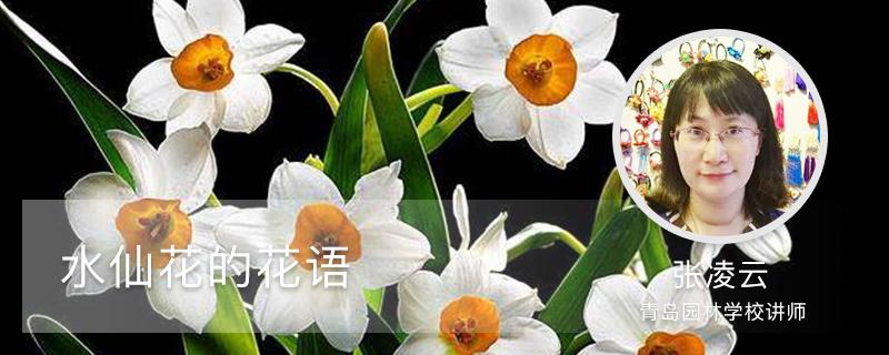 水仙花的花语