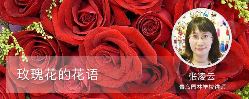 玫瑰花的花语