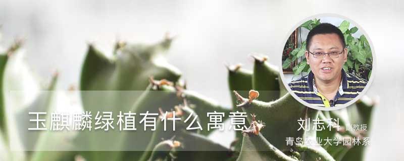 玉麒麟绿植有什么寓意