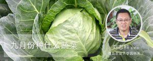 九月份种什么蔬菜