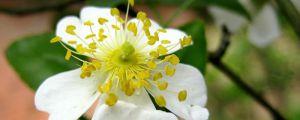 小果蔷薇的病虫害防治
