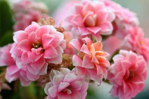这3种花,花期300天,花能开满枝头,每个人都值得拥有!