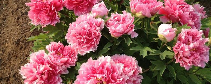 家庭养花自制花肥方法
