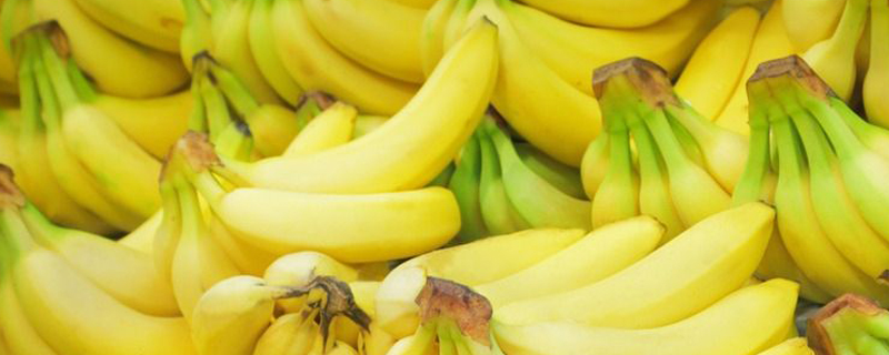 香蕉黄叶病的解决办法