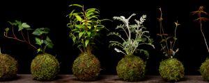苔玉盆景怎么制作