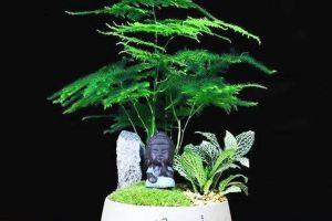 """冬天植物""""黄叶""""别着急,用""""它""""兑点水,喷在叶子上,几天油亮亮"""