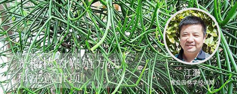 光棍树的养殖方法和注意事项