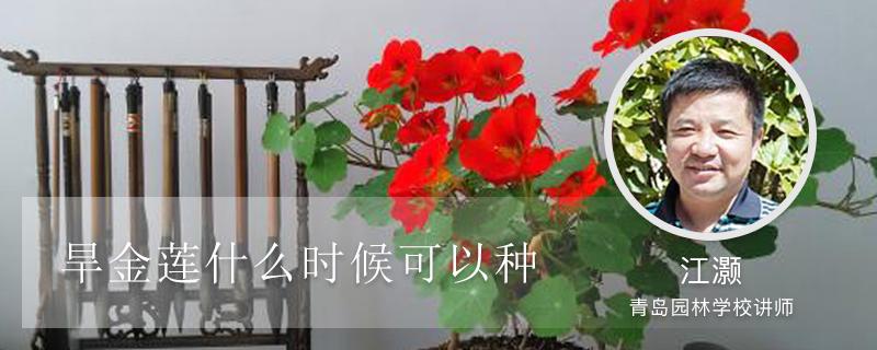 旱金莲什么时候可以种