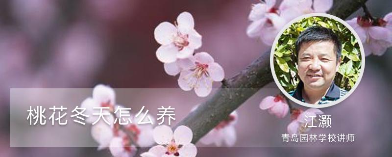 桃花冬天怎么养