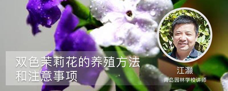 双色茉莉花的养殖方法和注意事项