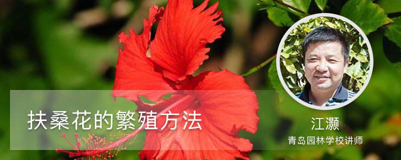扶桑花的繁殖方法