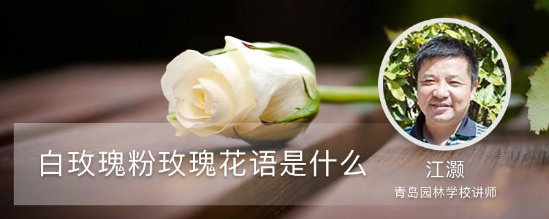 白玫瑰和粉玫瑰的花语分别是什么