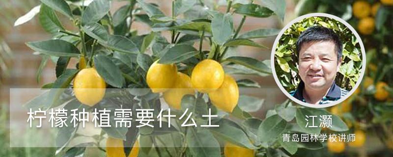 柠檬种植需要什么土