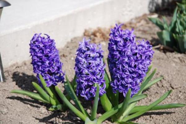 客厅里别养绿萝、发财树了!养这3种花多好,开花长满枝,喜庆!