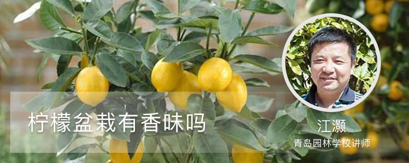 柠檬盆栽有香味吗,柠檬籽怎么种小盆栽