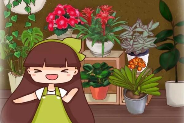 房间采光差,就养这10种耐阴花,比绿萝都好养!
