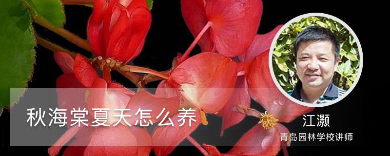 秋海棠夏天怎么养