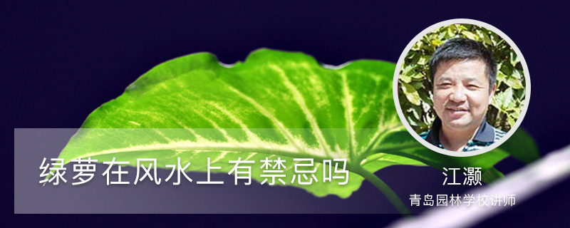 绿萝在风水上有禁忌吗