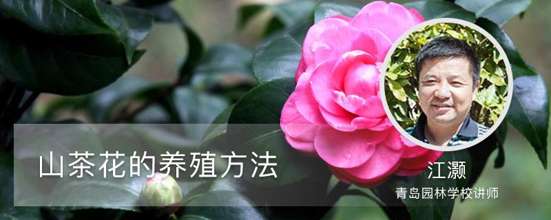 山茶花的养殖方法