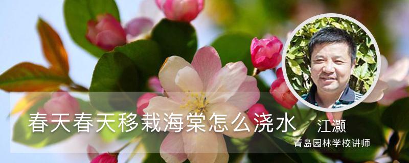春天移栽海棠怎么浇水