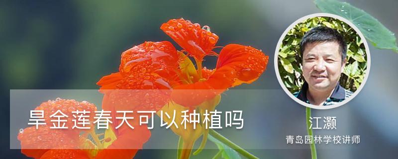 旱金莲春天可以种植吗