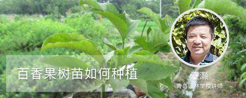 百香果树苗如何种植
