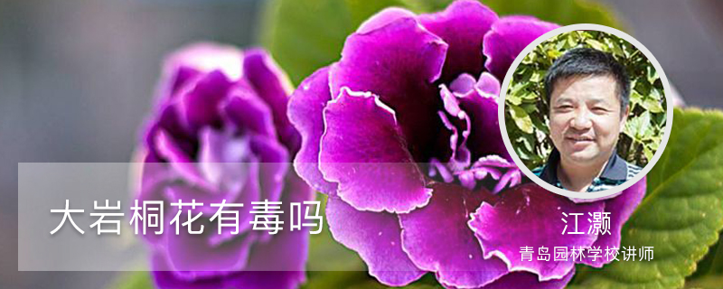 大岩桐花有毒吗