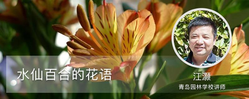 水仙百合的花语,花期多长时间
