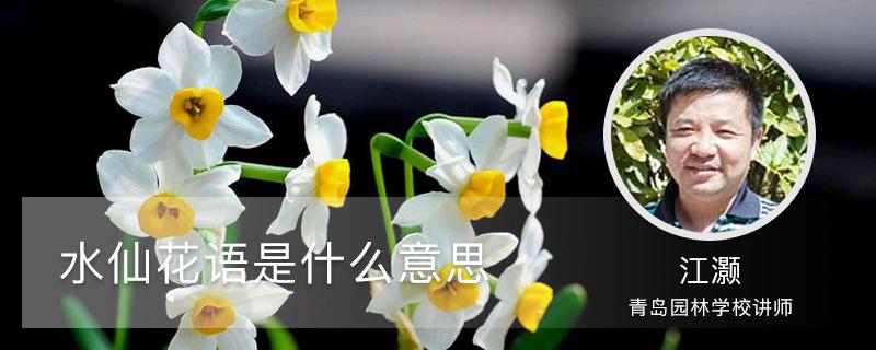 水仙花语是什么意思