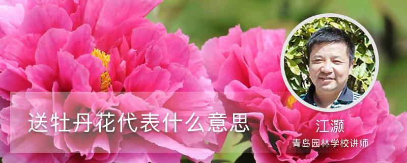 送牡丹花代表什么意思