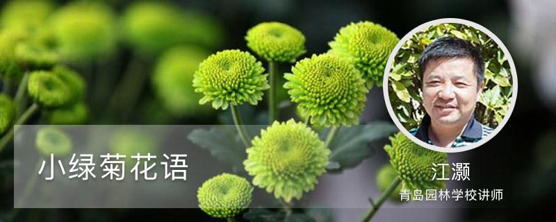 小绿菊花语