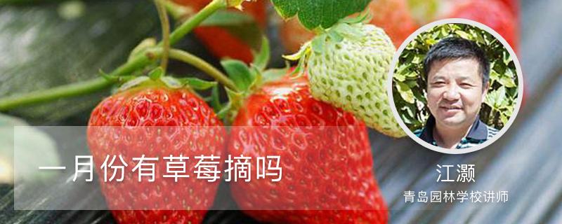 一月份有草莓摘吗