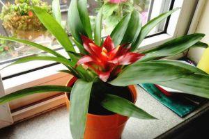 """在家想养花,就选这""""3种"""",开花长达100天!"""