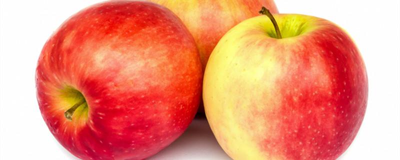 苹果苗品种介绍(红肉苹果苗、红心苹果苗)
